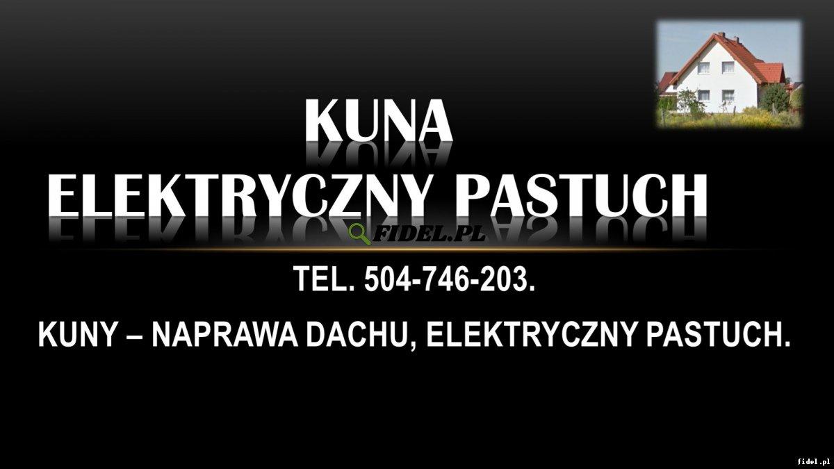 Zabezpieczenie domu przed kuną, tel. 504-746-203, cena. Pozbycie się kuny, ochrona. Elektryczny pastuch montaż. Skuteczne zabezpieczenie budynku.