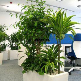 Rośliny zielone do biura