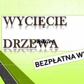 Wycięcie drzewa cena, tel. 504-746-203. ścięcie, wycinka  Wrocław.   Wycinanie drzew, gałęzi. Usuwanie drzew. Cięcie gałęzi, przycinanie, cennik