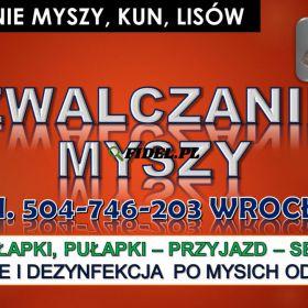 Likwidacja myszy, tel.504-746-203 cena, Wrocław. Pozbycie się myszy, deratyzacja.