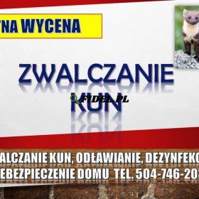Odławianie kun, kuna, tel. 504-746-203, odstraszanie i  dezynfekcja, Wrocław