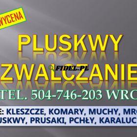 Dezynfekcja na pluskwy, cennik, tel. 504-746-203, Wrocław. Zwalczanie owadów, usługi dezynfekcji w mieszkaniu