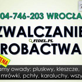 Zwalczanie robactwa cena, tel. 504-746-203, Wrocław. Likwidacja insektów i usuwanie szkodników