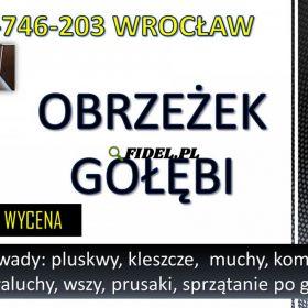 Obrzeżek gołębi, dezynfekcja tel. 504-746-203, Wrocław. Ptasie kleszcze od gołębi likwidacja, cennik
